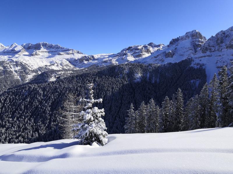 freeride skiarea campiglio (3)