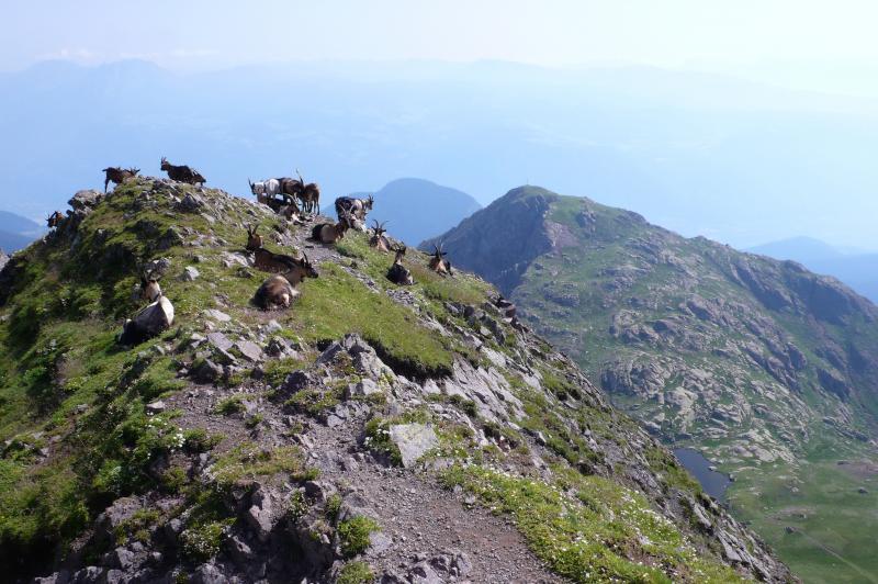 hofer weg trekking guide accompagnatori media montagna pinzolo (1)