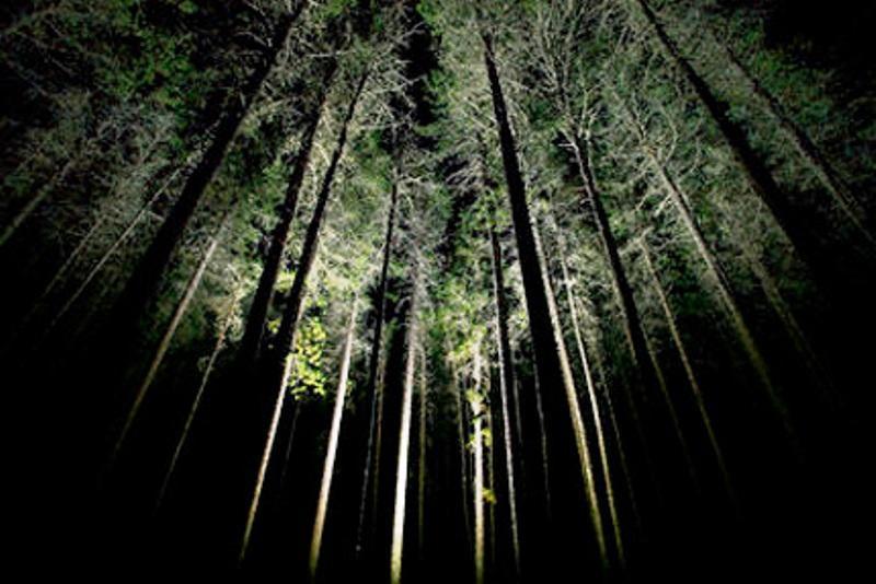bosco_notte_guide_alpine_madonna_campiglio